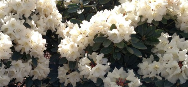 Seasonal Allergy Natural Remedies