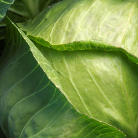 13 Healthy Reasons To Start Eating More Cabbage